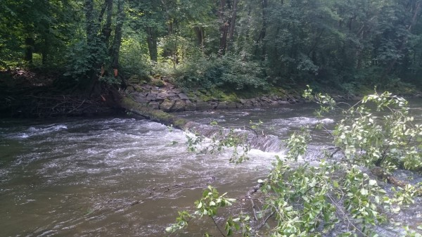 Spadnuty strom cez rieku