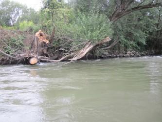 Čiastočne odstránený spadnutý strom cez rieku Hornád